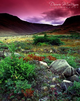 landscape photo tablelands newfoundland canada flowers and rocks